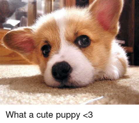 puppy memes what a puppy