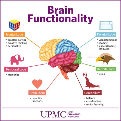 sections of the brain and what they control get to know the parts of your brain upmc healthbeat
