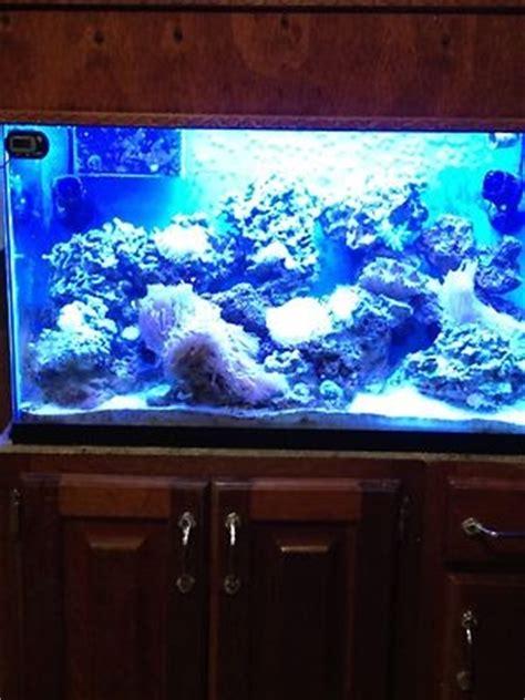aquarium design usa reef aquarium 30 gallon 30 gallon reef aquarium usa