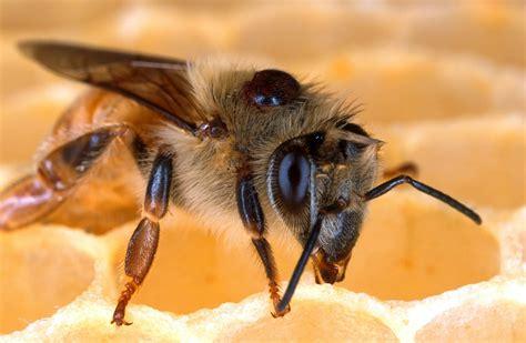 libro minicuentos de abejas y sobre abejas matem 225 ticas y pompas de jab 243 n biolog 237 a naukas