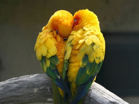 mexicanlove bird common health problems of birds boldsky