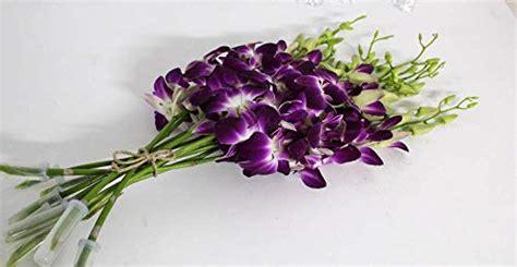 dendrobium orchids  sale   left