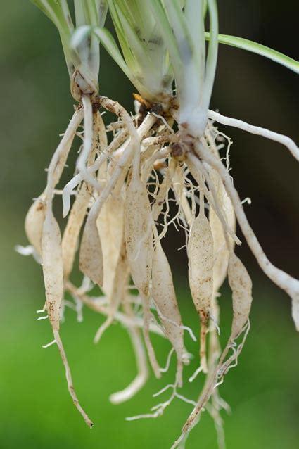 give  houseplants  fresh start greenview fertilizer