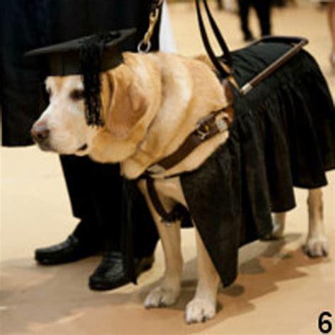 inilah cita citaku ada ada saja inilah 10 hewan yang sukses meraih gelar sarjana