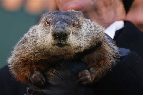 groundhog day will come groundhog day punxsutawney phil predicts early