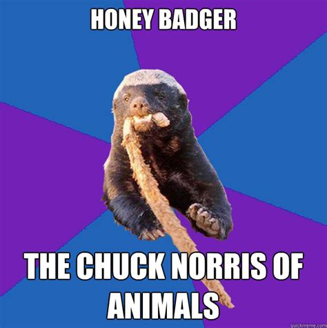 Badger Memes - honey badger the chuck norris of animals honey badger