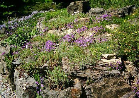 ideen für steingarten 3403 fixias alpinen steingarten anlegen 212421 eine