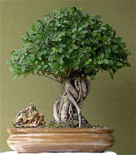 libro the bonsai bible the tecnicas del bonsai ii pdf proofgalalx over blog com