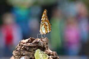 Botanischer Garten Augsburg Schmetterlinge 2016 Botanischer Garten Augsburg Schmetterlinge 28 News