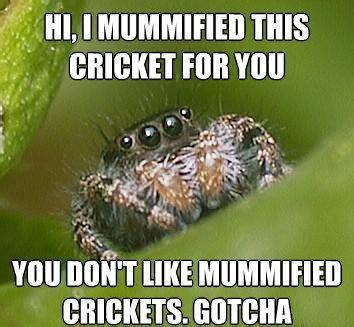 Misunderstood Spider Meme - the best of the quot misunderstood spider quot meme 19 pics