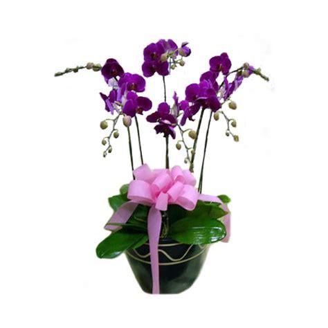 Lu Hias Bentuk Anggrek Ungu rangkaian anggrek bulan murah harga 1 juta toko bunga murah