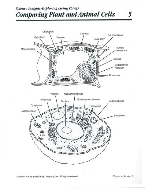 Printable Animal And Plant Cell Diagram | animal cell animals and plant cell on pinterest