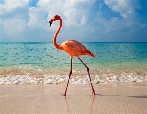 Bfs Big Flamingo elegance of flamingo god s creatures