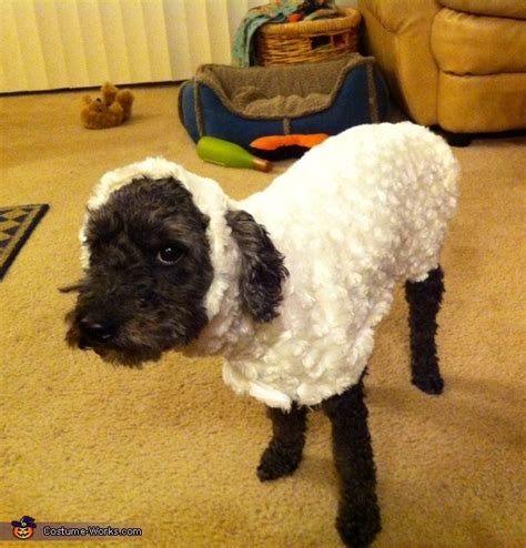 lost sheep costume  dogs