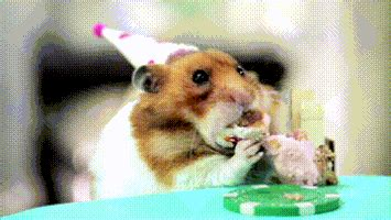 birthday gif happy birthday gif find on giphy