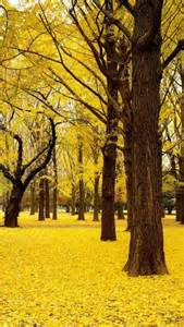 autumn park yellow leaves forest plant fall pinterest