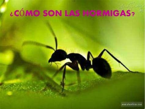 imagenes de la vida de las hormigas las hormigas