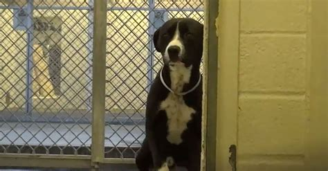 Gardena Ca Pound Timid Shelter Has The Best Reaction After Being Adopted