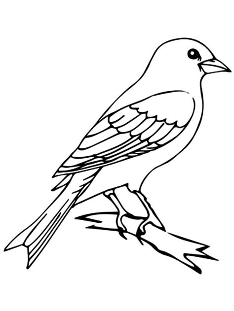 Happy Canary Bird Coloring Pages Best Place To Color Mockingbird Coloring Page