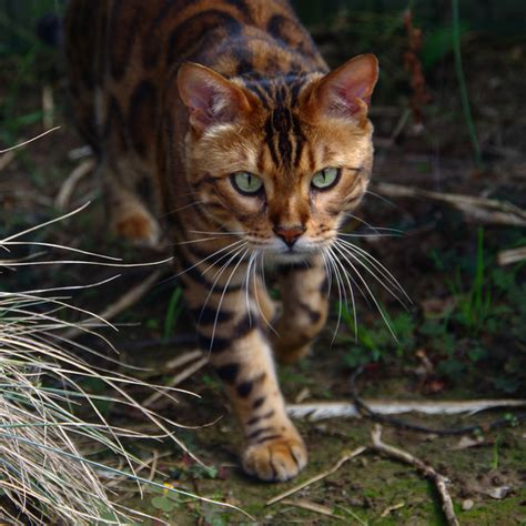The Stripe Cat This Striped And Spotted Cat S Fur Is Mesmerizing The