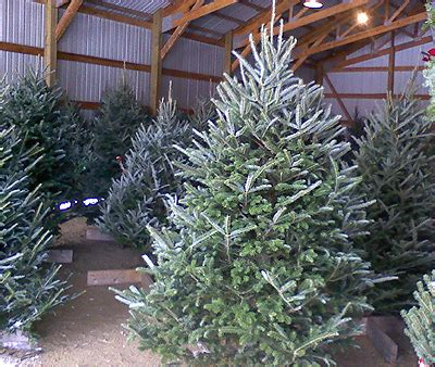 it s christmas time at arbor hill tree farm arbor hill