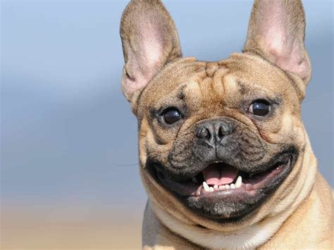 homes for happy dogs 10 tips for a happy healthy saga