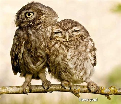 19 best images about owls on pinterest owls owl and cute baby owls god s creatures pinterest