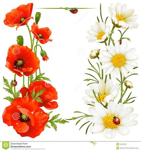Flowers Free Sul elementi di disegno della camomilla e papavero