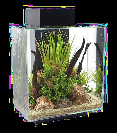 aquarium design in bangladesh aquarium as a centerpiece peaceful decor relaxing item