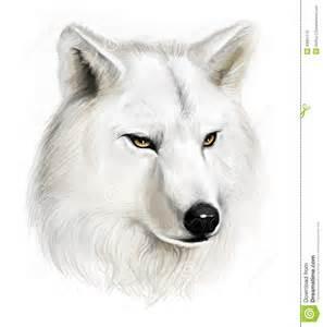 white wolf stock illustration image 43901170