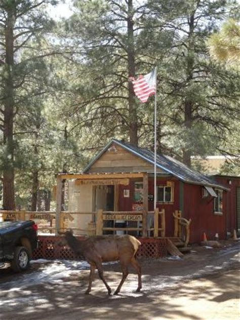 Hualapai Cabins by The General Store Where The Elk Also Visit Picture Of