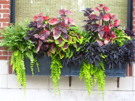 Planter Box Plants Ideas container gardening ideas protecting window flower boxes
