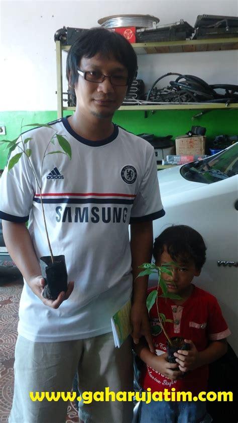 Bibit Sengon Pasuruan serah terima bibit gaharu kemitraan dengan pt duta gaharu