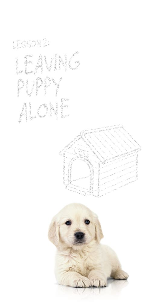 leaving puppies leaving your puppy alone science diet pet parenting academy