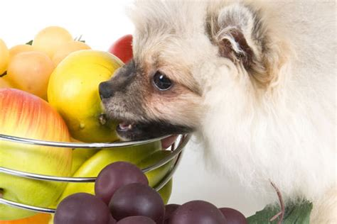 can dogs eat plums what fruits can dogs eat