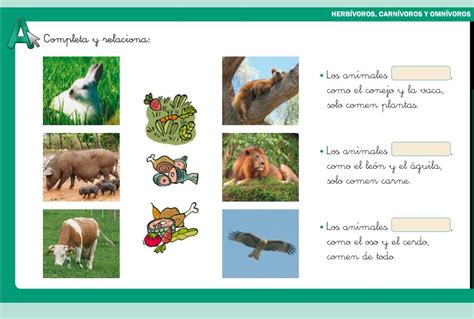 imagenes animales herbivoros carnivoros y omnivoros herb 237 voros carn 237 voros y omn 237 voros didactalia material
