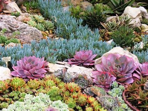 giardini con piante grasse giardini piante grasse piante grasse piante grasse da