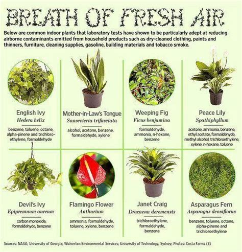 best houseplants for clean air clean air plants indoor gardens pinterest