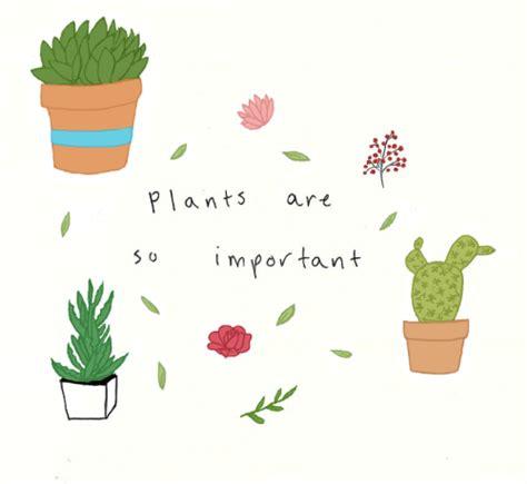 cute plants cactus cute drawing tumblr