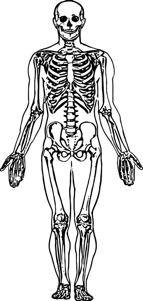 skeleton picture sketch drawing coloring page