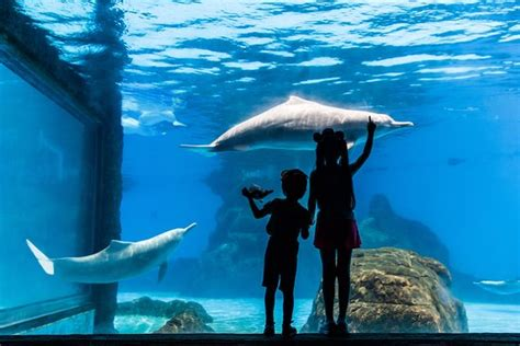 ocean design aquarium reviews chimelong ocean kingdom zhuhai china top tips before