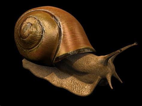 terrestrial snail pictures about animals land snail 3d model 3dsmax files free download modeling