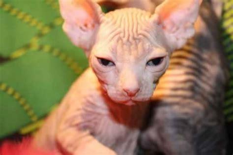 imagenes de animales feos del mundo fotos de animales feos imagui