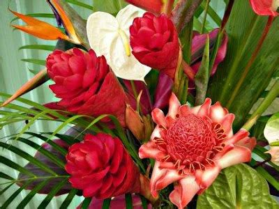 best flowers in the world flowers from hawaii best flowers in the world 02 20 12