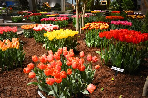 Flower And Garden Show Chicago Flower And Garden Show 2016 Preview Coronado