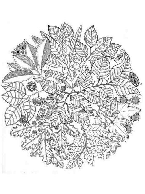 flower garden coloring pages for adults 12 garden flowers printable coloring pages for adult