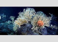 SEABED MINING Manganese Nodules Ocean Floor