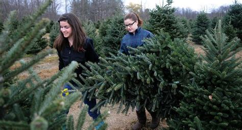cut your own christmas tree albany ny where to cut your own tree in the finger lakes newyorkupstate