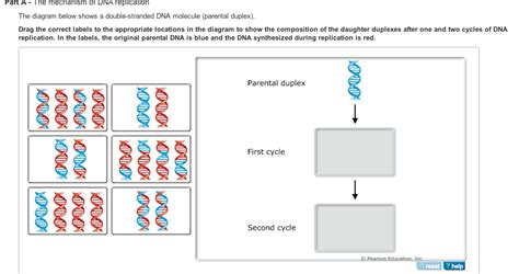 7 proteins involved in dna replication dna replication is the mechanism by which dna is c