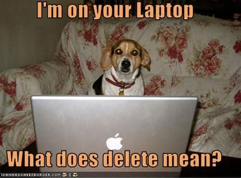 Dog On Computer Meme - cats and dogs playing with computers you know who wins